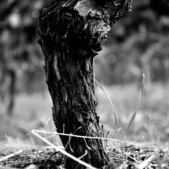 The Vine large