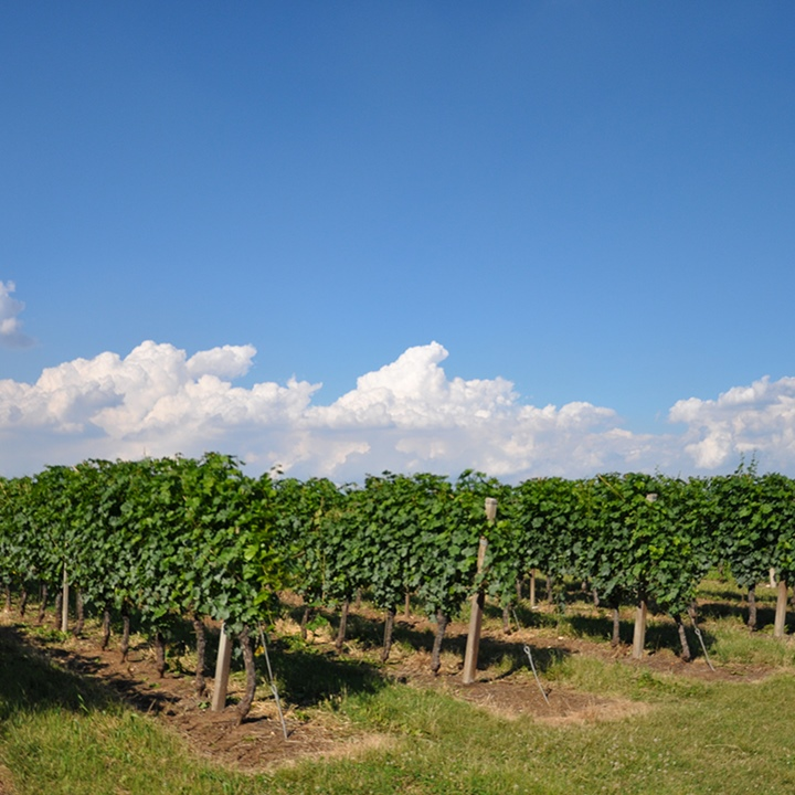 Cà del Vento vineyard large